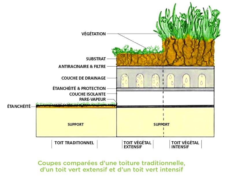 Illustration des 3 types de toit végétal